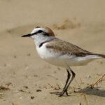 L'ornitologia e la politica